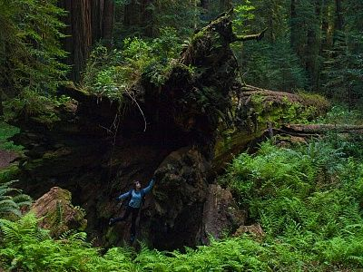 inside-fallen-redwood-tree-avenue-giants-california.jpg