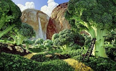 brocolli-forest-1_1671581i.jpg