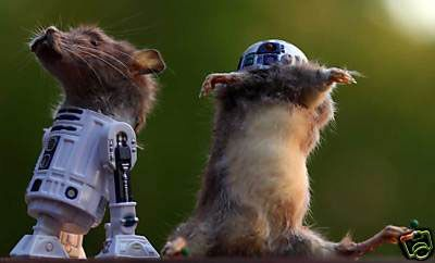 r2d2-taxidermy.jpg